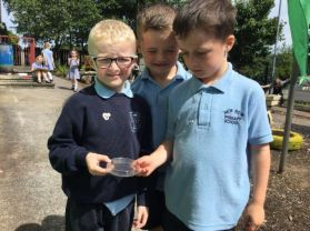 Year 1 'Going on a Bug Hunt'