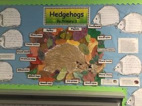 Hedgehogs by Year 3